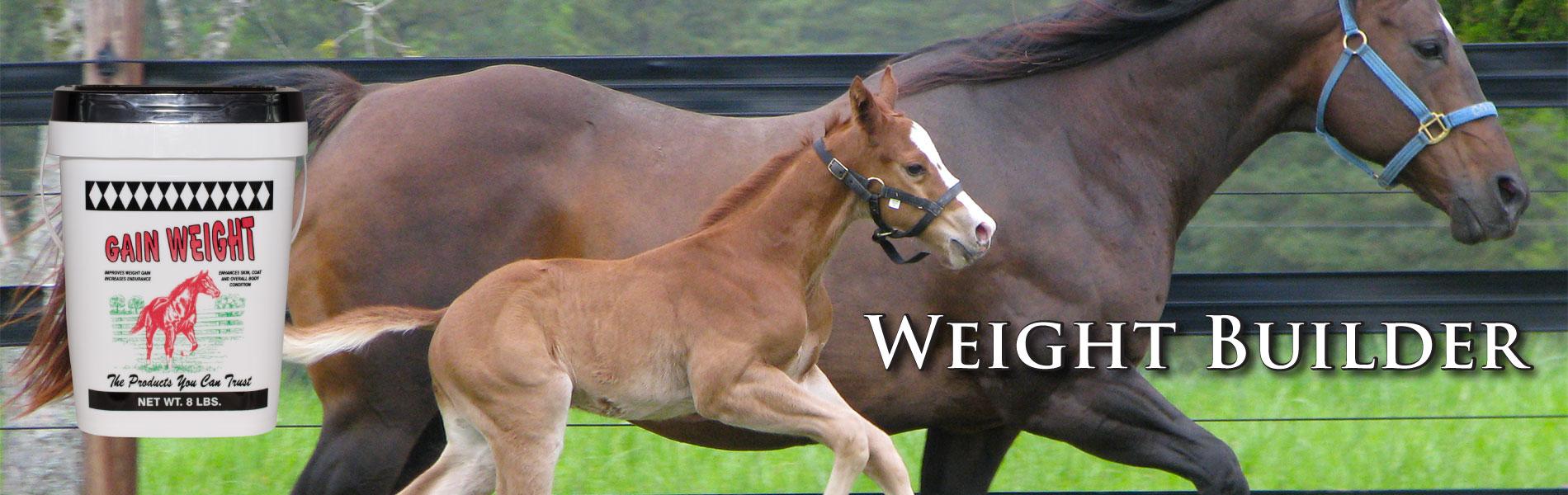 cox-vet-lab-horse-weight-gain